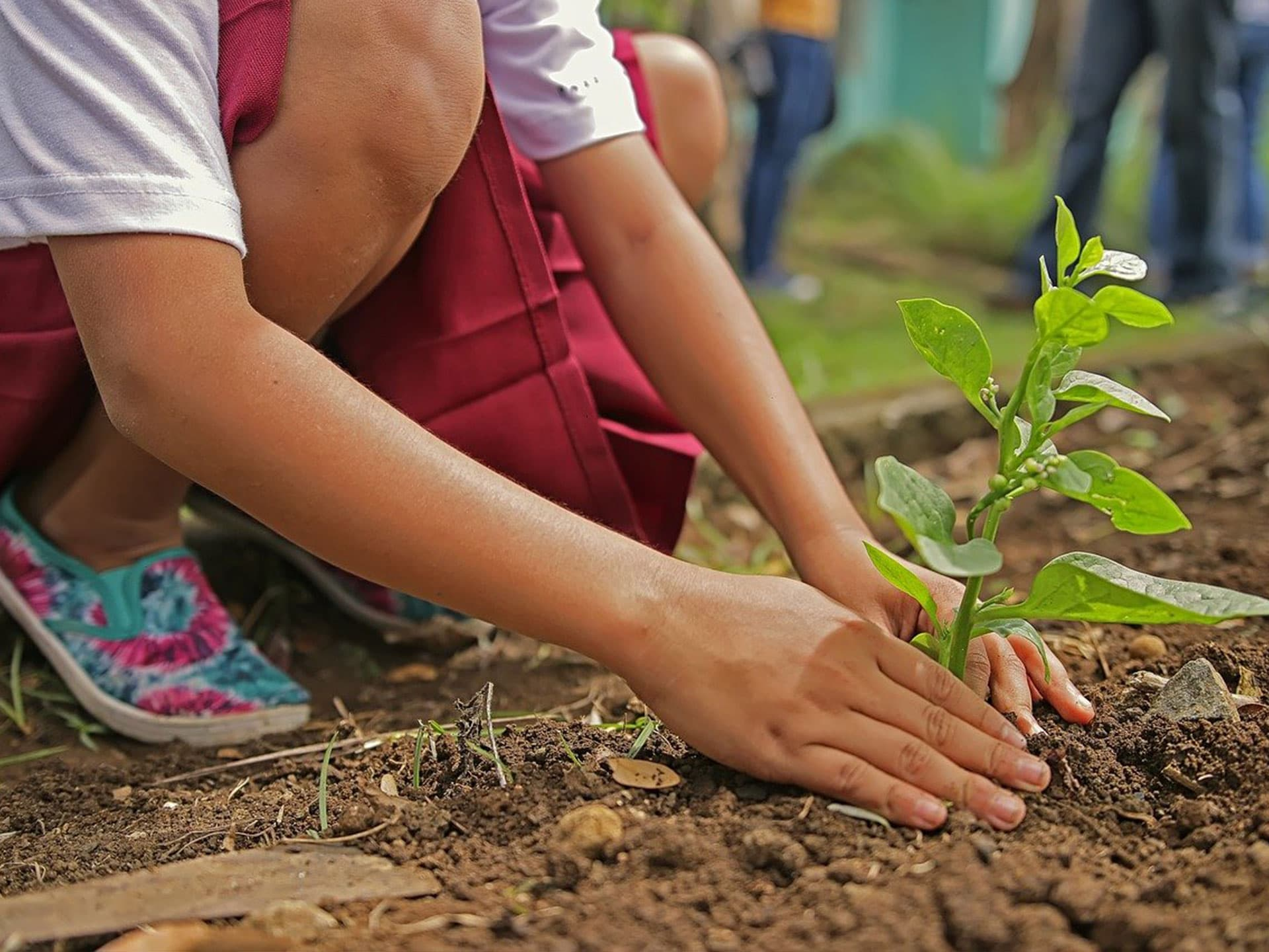 Pour chaque collaborateur promu, un nouvel arbre planté